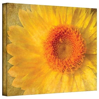ArtWall Flowers in Focus I' by Antonio Raggio Graphic Art on Canvas; 18'' H x 24'' W