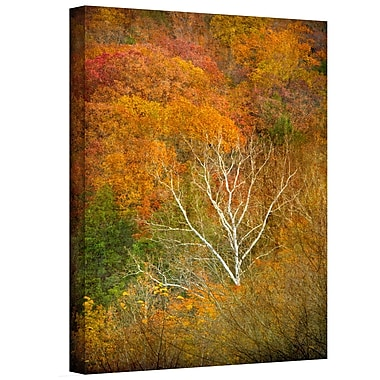 ArtWall In Autumn' by Antonio Raggio Photographic Print on Canvas; 36'' H x 24'' W