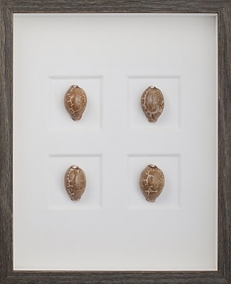 Mirror Image Home Map Cowrie Shells Framed Graphic Art; Brown