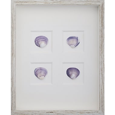 Mirror Image Home Clam Shells Framed Graphic Art; White Distressed