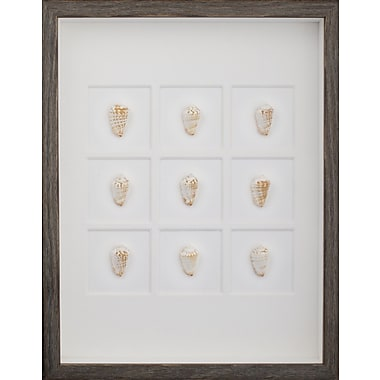 Mirror Image Home Strawberry Conch Shells Framed Graphic Art; Brown