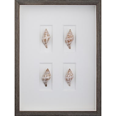 Mirror Image Home Tulip Shells Framed Graphic Art; Brown