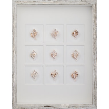 Mirror Image Home Murex Shells Framed Graphic Art; White Distressed