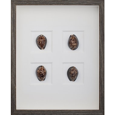 Mirror Image Home Morning Cowrie Shells Framed Graphic Art; Brown