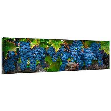Colossal Images Grapes Photographic Print on Wrapped Canvas