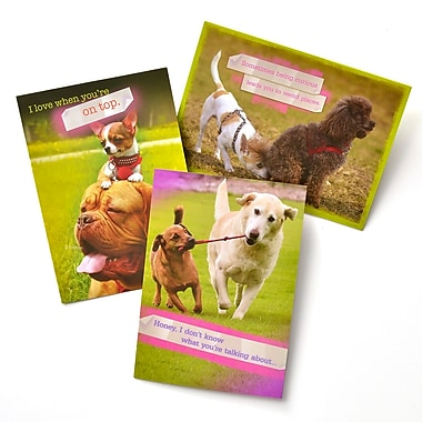 Gartner Greetings Pet Humor Greeting Cards, 3 pack, Thinking Of You, Curious