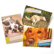 Gartner Greetings Pet Humor Greeting Cards, 3 pack, Just For Fun