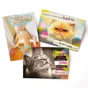 Gartner Greetings Pet Humor Greeting Cards, 3 pack, Blank