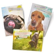 Gartner Greetings Pet Humor Greeting Cards, 3 pack, Birthday, Way Cool