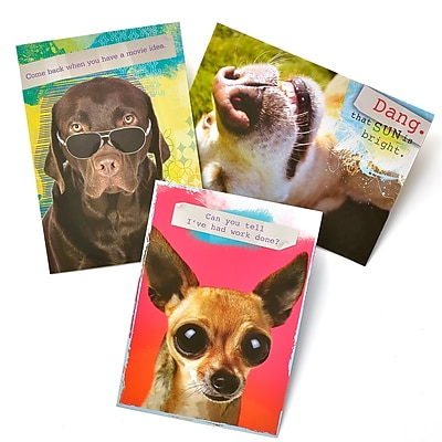 Gartner Greetings Pet Humor Greeting Cards, 3 pack, Birthday, Recovery