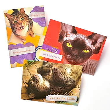 Gartner Greetings Pet Humor Greeting Cards, 3 pack, Birthday, Best Birthday