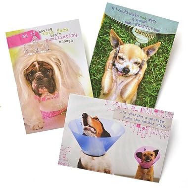 Gartner Greetings Pet Humor Greeting Cards, 3 pack, Birthday, Face it