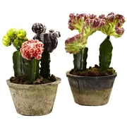 Nearly Natural 4843-S2 Decorative pot Colorful Cactus Gardens Multi Color