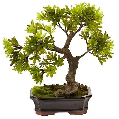 Nearly Natural 4848 Podocarpus Bonsai with Moss Planter 14 x 14 inch Green