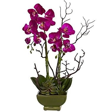Nearly Natural Orchid & Succulent Arrangement Multi Colour (4990)
