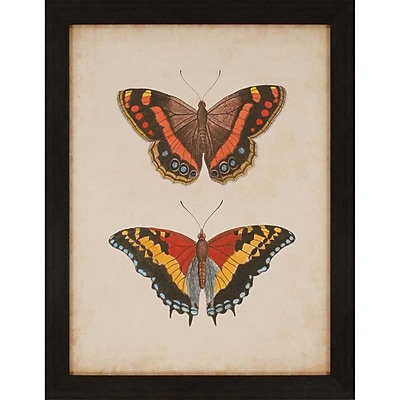 Paragon Antique Butterfly IV by Anonymous Framed Graphic Art