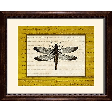 PTM Images Dragonfly II Framed Graphic Art