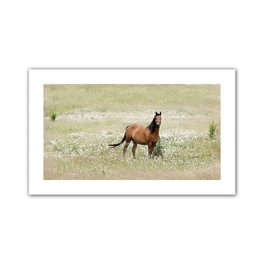 ArtWall Equine Stare' by Antonio Raggio Photographic Print on Rolled Canvas; 30'' H x 52'' W