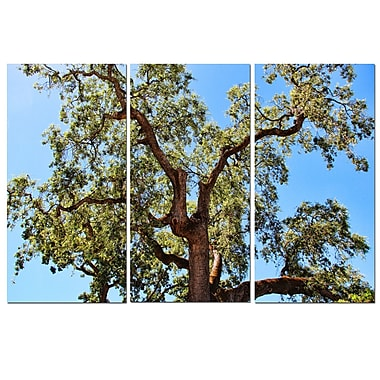 Ready2hangart Tree by Christopher Doherty 3 Piece Photographic Print on Canvas Set