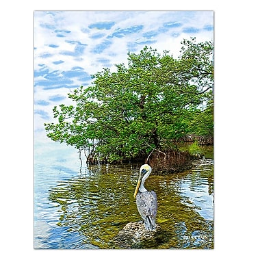 Ready2hangart 'Pelican' by Bruce Bain Photographic Print on Wrapped Canvas