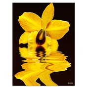 Ready2hangart 'Yellow Orchid' by Bruce Bain Photographic Print on Wrapped Canvas