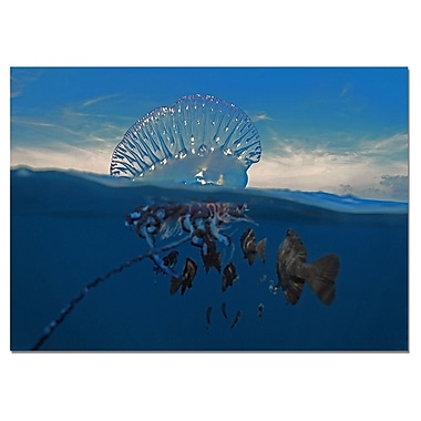 Ready2hangart Jellyfish by Christopher Doherty Framed Photographic Print