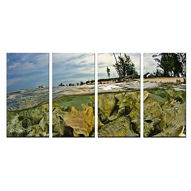 Ready2hangart 'Conch Shells' by Christopher Doherty 4 Piece Photographic Print on Wrapped Canvas Set