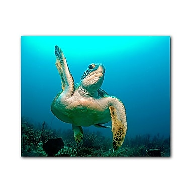 Ready2hangart Turtle High Five by Christopher Doherty Photographic Print on Canvas