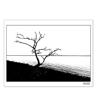 Ready2hangart 'Tree' by Bruce Bain Photographic Print on Wrapped Canvas