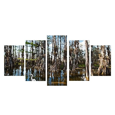 Ready2hangart 'Tall Cypress' by Bruce Bain 5 Piece Photographic Print on Wrapped Canvas Set
