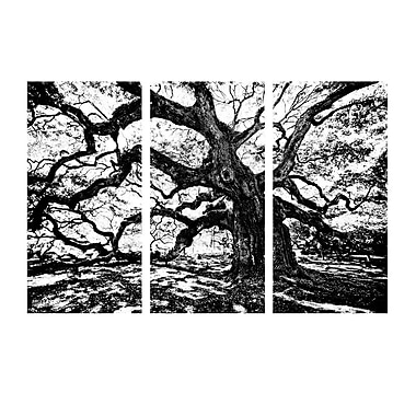 Ready2hangart 'Oak' by Bruce Bain 3 Piece Photographic Print on Wrapped Canvas Set