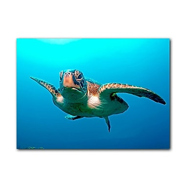 Ready2hangart Squirt Blue by Christopher Doherty Photographic Print on Canvas