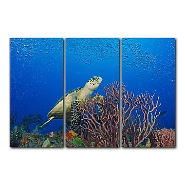Ready2hangart Turtle by Christopher Doherty 3 Piece Photographic Print Set