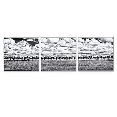 Ready2hangart 'Palms' by Bruce Bain 3 Piece Photographic Print on Wrapped Canvas Set