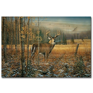 WGI GALLERY November Whitetail Deer by Sam Timm Painting Print Plaque; 16'' H x 24'' W x 1'' D