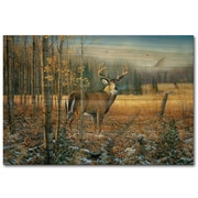 WGI GALLERY November Whitetail Deer by Sam Timm Painting Print Plaque; 8'' H x 12'' W x 1'' D