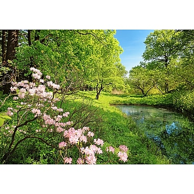 Ideal Decor Park in the Spring Wall Mural, 144