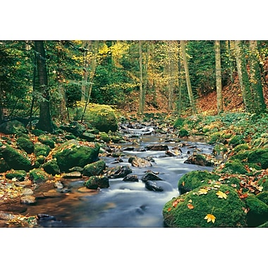 Ideal Decor – Mural Forest Stream, 100 po x 144 po