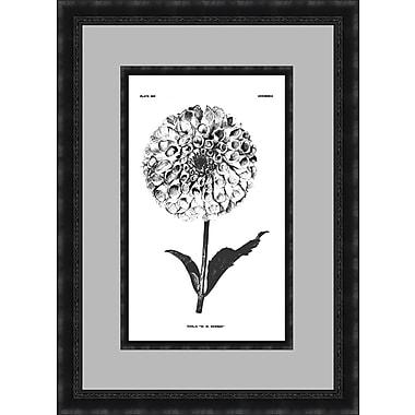 PTM Images Botanical I Framed Graphic Art