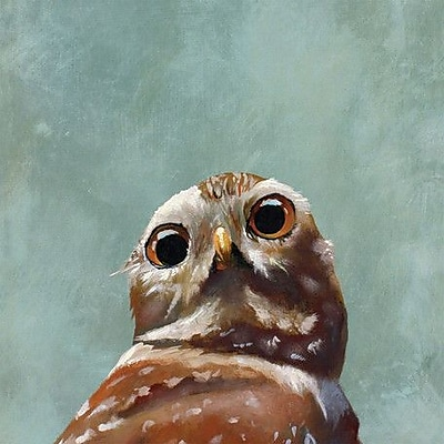 GreenBox Art 'Cover Owl' by Mincing Mockingbird Painting Print on Wrapped Canvas