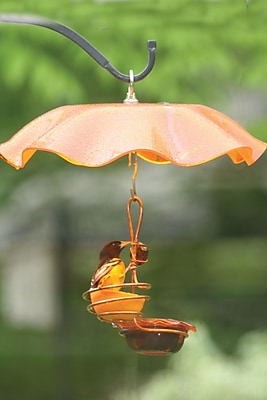 Birds Choice Single Cup/Single Fruit Oriole Tray Bird Feeder (WYF078277616745) photo