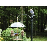 Birds Choice Supper Dome Bluebird Suet Bird Feeder