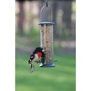 Birds Choice Low Cost Tube Bird Feeder