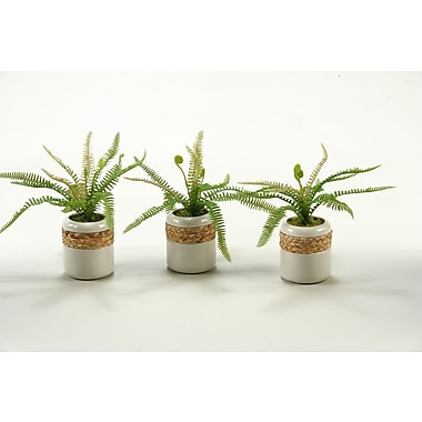 D & W Silks Deer Fern in Round Ceramic Planter (Set of 3)
