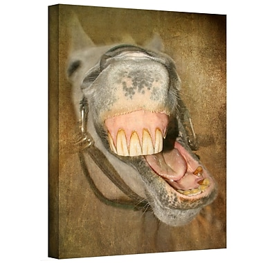 ArtWall Laughing Horse' by Antonio Raggio Photographic Print on Canvas; 24'' H x 18'' W