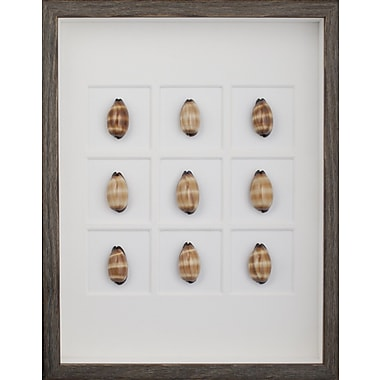 Mirror Image Home Mole Cowrie Shells Framed Graphic Art; Brown