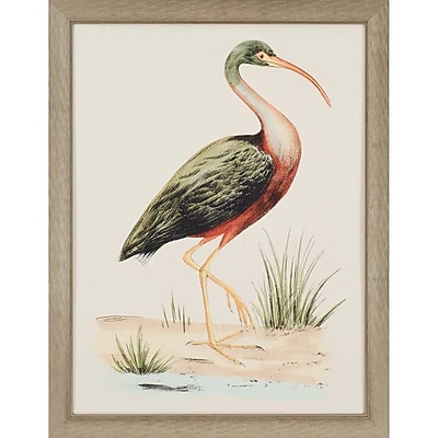 Paragon Water Bird I by Meyer Framed Painting Print