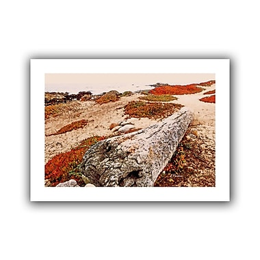 ArtWall Log on Pebble Beach' by Linda Parker Painting Print on Rolled Canvas; 22'' H x 16'' W