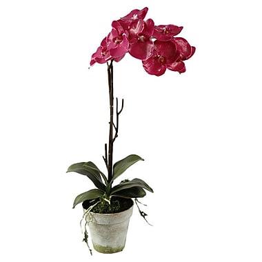 Winward Silks Phalaenopsis in Clay Pot