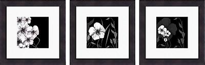 PTM Images Ebony and Ivory 3 Piece Framed Graphic Art Set